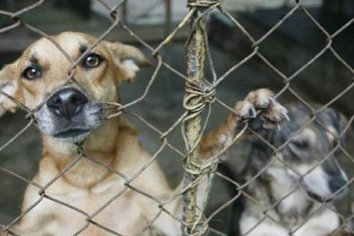 proyecto-ley-maltrato-animal