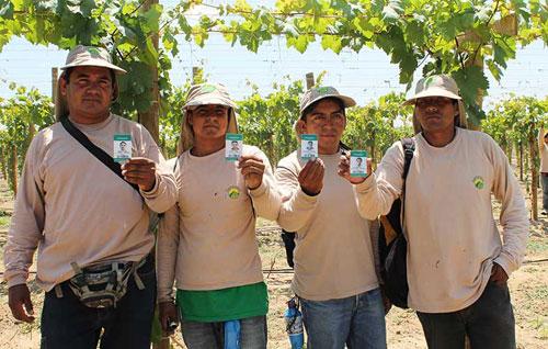 proyecto-sicat-beneficia-a-mas-de-15-mil-trabajadores-de-camposol