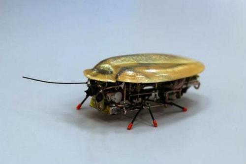 crean-una-cucaracha-robot-para-localizar-vidas-humanas-tras-un-terremoto