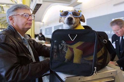 mascotas-pueden-viajar-en-cabina-en-aerolinea-lan