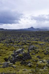 Berserkjahraun, lavafelt, Island, natur