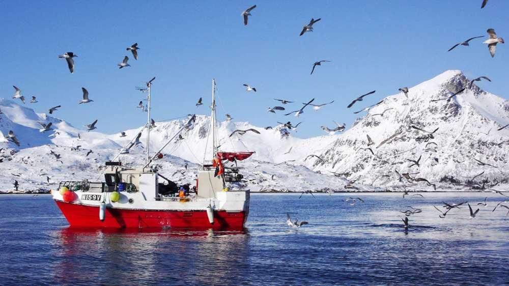 Fiske i Lofoten
