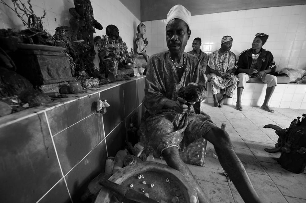 Kyllingofring under en voodooseremoni i Benin