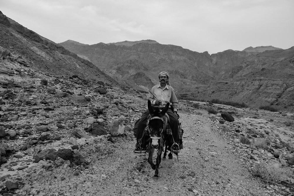 Mann rir på esel i Jordan