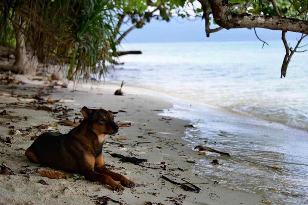 Hund på en øye øy i Ko Chang National Park i Thailand