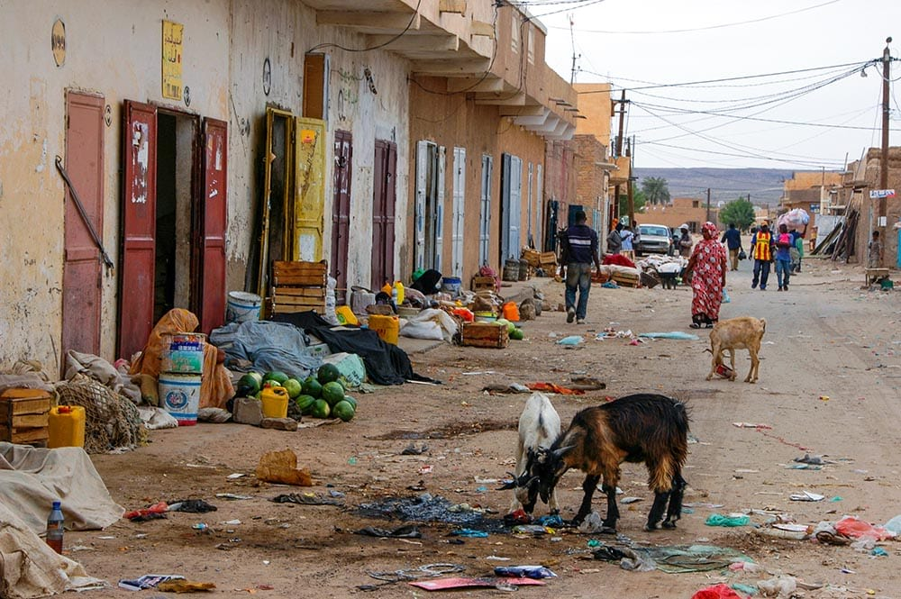 Sauer spiser søppel i Afrika