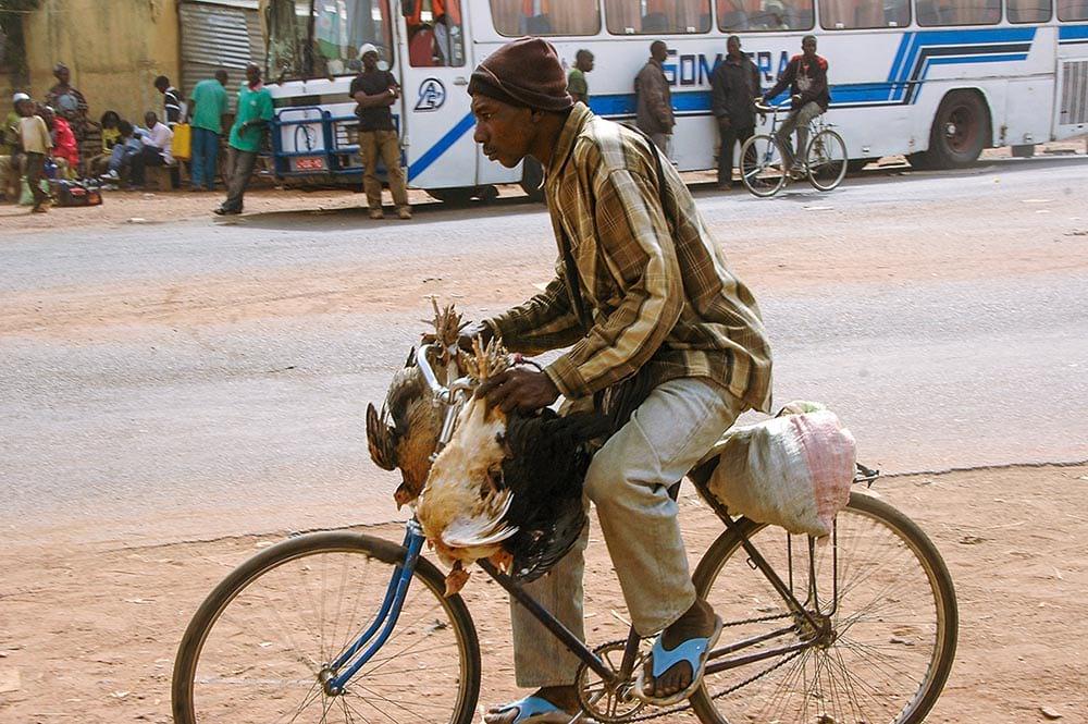 Mann frakter høner på sykkel i Afrika