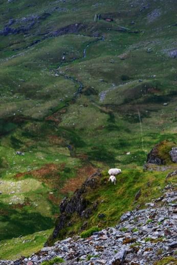 Sauer på Snowdon