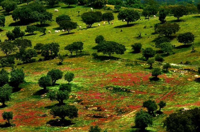 Utsikt over en dal i Alentejo på våren