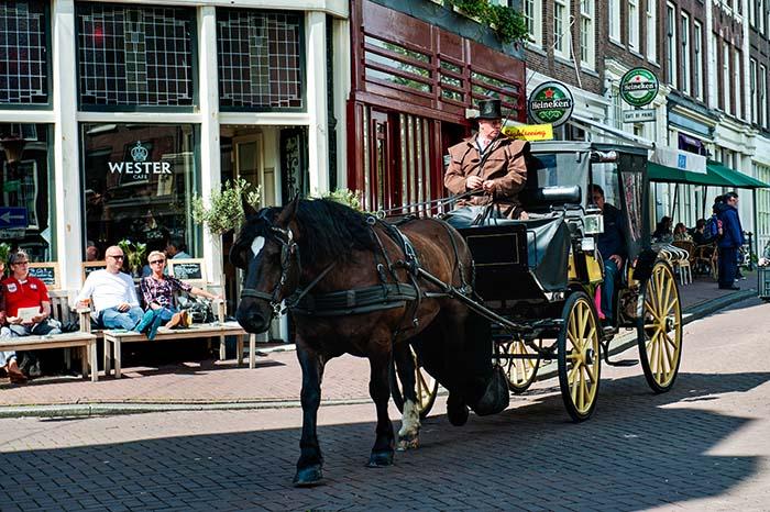 Hest og kjerre i Amsterdam