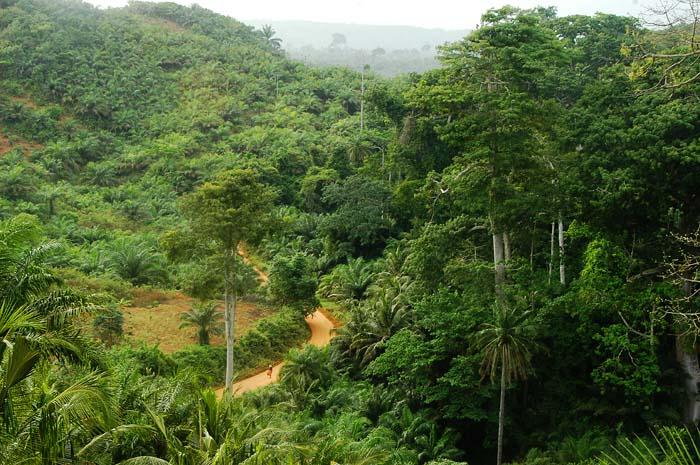 Skog langs den ghanesiske kysten