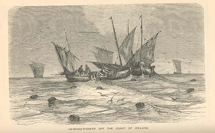 historisk bilde av sildefiske utenfor Island i 1876