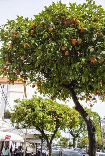 Appelsintre på Solkysten