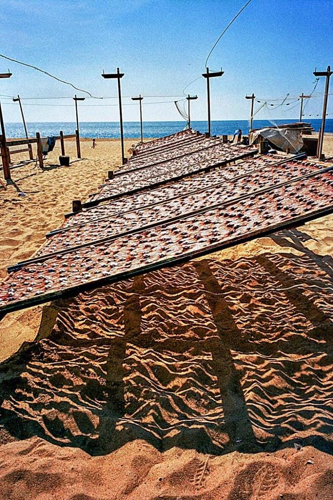 Fisk til tørk på stranda i Nazaré