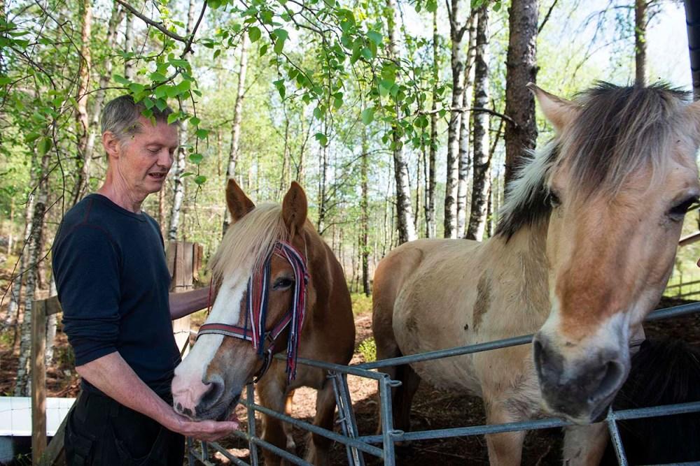Odd Johansen med hestene på Torvløbakkan Gård
