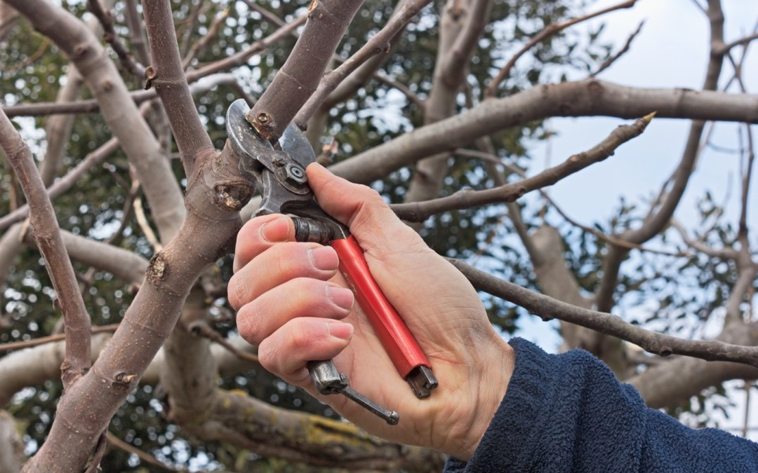 Why It's Important: Pruning your Board?