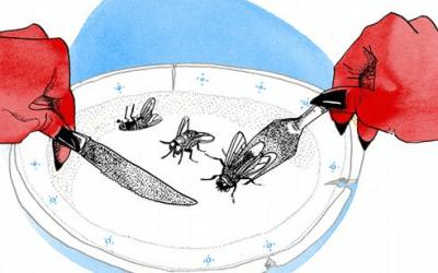 """أمثال ألمانية شائعة مع الشرح واللفظ """"في وقت الضيق يأكل الشيطان الذباب"""""""