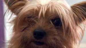 في ألمانيا .. كلب صغير يدفع حياته ثمناً لخلاف بين رجل و شريكة حياته