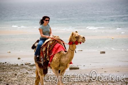 Camelback Riding