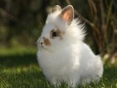 ztfuzi - Das Kaninchen