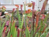 Carnivorous plants say: insects, yum.