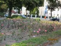 Roses- suitably called Roseneck (Rose Corner)