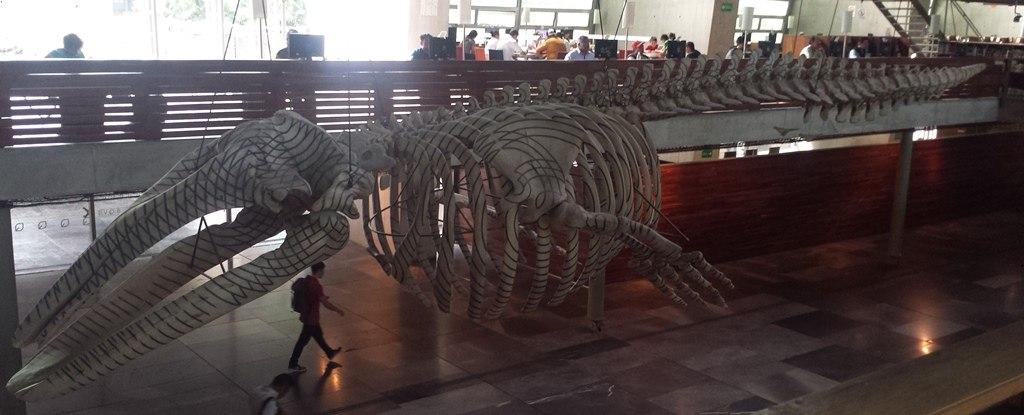 Bibliothèque Vasconselos avec le squelette de baleine - Mexico