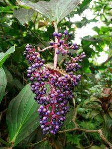 Hawaiian botanical tropical garden