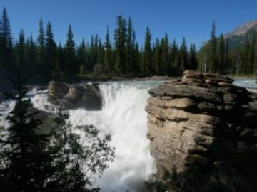 Chuttes d'Athabasca à Jasper