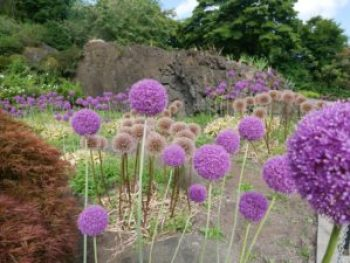 Jardins du parc Queen Elizabeth