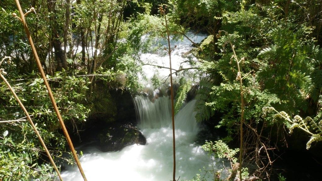 Parc Pumalin Sentier de la rana
