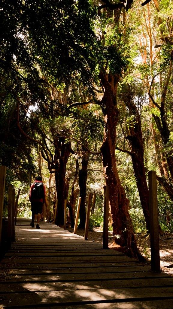 Parc Llao Llao Arrayanes