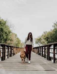 Voyager avec son chien - Travel with a dog