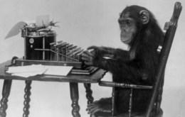 chimp typing