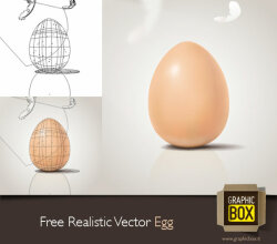 Vector Realistic Egg