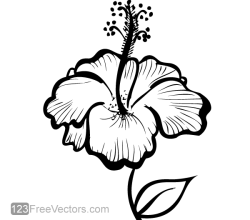 Hand Drawn Hibiscus Flower Vector
