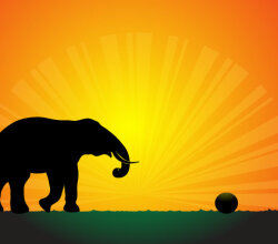 Vector Elephant Silhouette in the Sunset Wallpaper