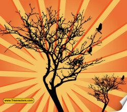 Sunburst Tree Vector