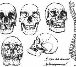 Free Skull Vector Pack