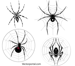 Spider Web Free Vector Art