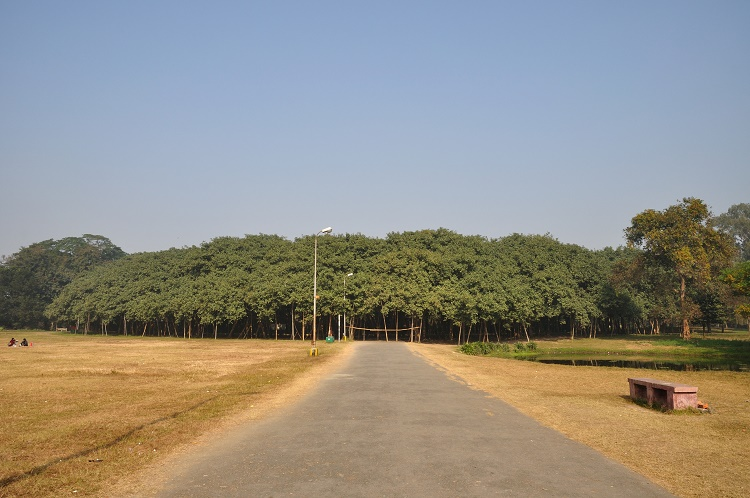 A Banyan Tree near Kolkata, India is bigger than the average Walmart