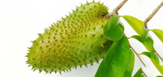 Believe it or not this single plant kills malignant cells of 12 types of cancer