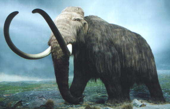 Mammoths were alive when they were building the pyramids