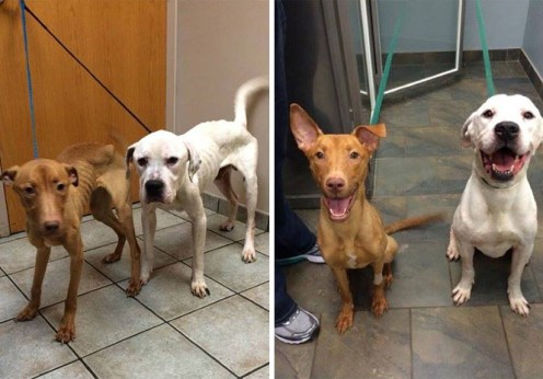 See how love and care completely transformed these two starving dogs