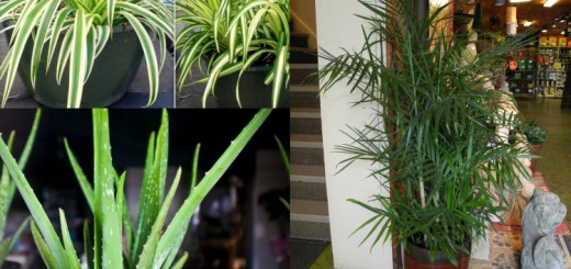 Wow! House plants that purify the air and live on forever