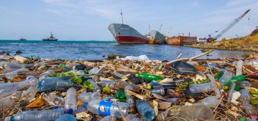 A study says that by 2050 our oceans will contain more plastic than fish