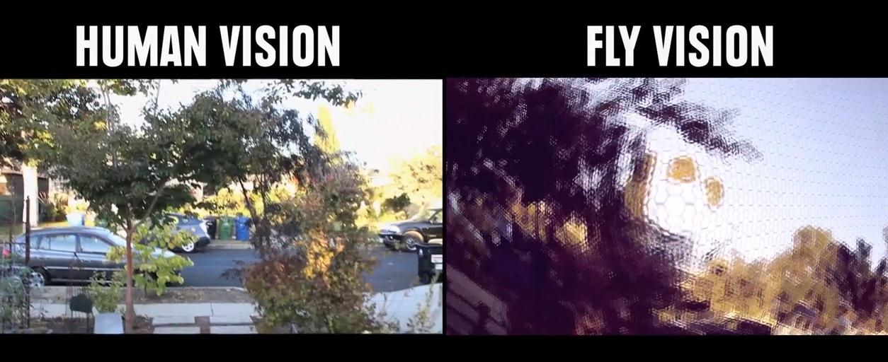Human vision vs Flies vision