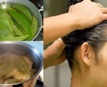 How to use guava leaves for hair loss