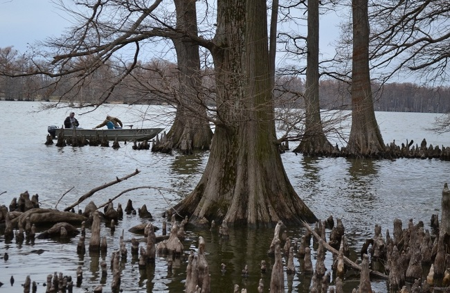 Reelfoot Lake in Tennessee USA