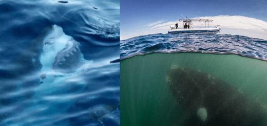 14 Images that may make you uneasy proving you have Thallasophobia or a fear of the sea